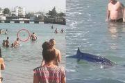 «Βασιλική Ζαργάνα» το ψάρι που φέρεται να τάραξε τα νερά των λουομένων στην πλαζ Αστέρια- Δείτε γιατί το Λιμεναρχείο σχημάτισε δικογραφία…